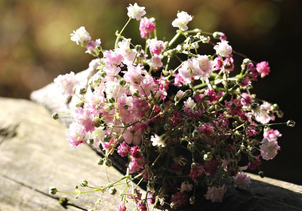 rosa tütchen