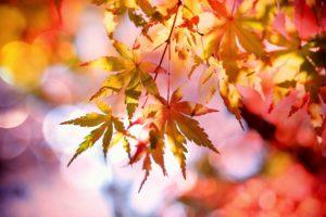 Herbst achtsamkeit selbstfürsorge wildpflanzen
